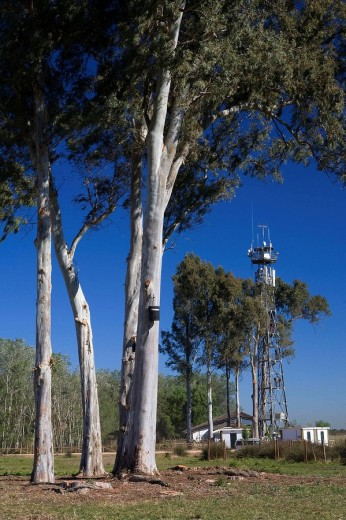 Stock Photo: 1566-475039 Biological Station of Doñana Biological Reserve, Doñana National Park, Huelva, Andalucia, Spain, Europe.
