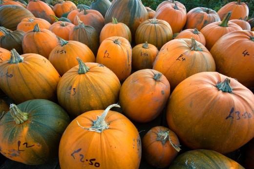 Pumpkins for sale Norfolk October : Stock Photo