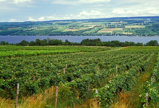 Stock Photo: 1566-482520 New York Finger Lakes Wine Producing Region