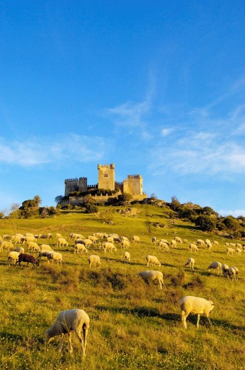 Castle of Almodóvar del Río Córdoba province, Andalusia Spain : Stock Photo