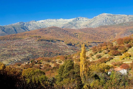 Stock Photo: 1566-484964 Autumn Landscape with the Sierra de Béjar the background Farms with cherry Jerte Valley, Sierra de Gredos in the province of Cáceres, Extremadura, Spain, Europe