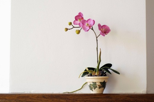 Orchid Plastic Flowers : Stock Photo