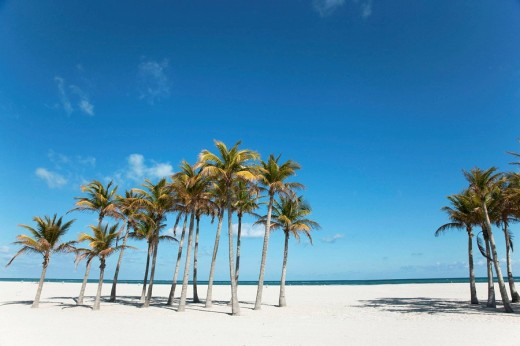 Stock Photo: 1566-504654 Palm trees. Miami. Florida. USA