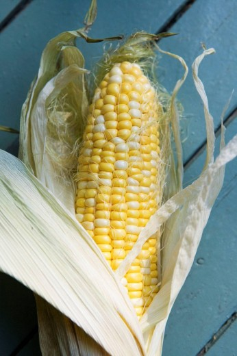 Stock Photo: 1566-505315 Fresh Sweetcorn