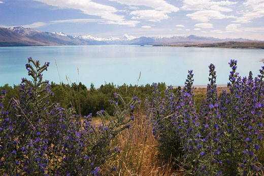 Stock Photo: 1566-505880 Mt Cook, Lake Pukaki, South Island, New Zealand