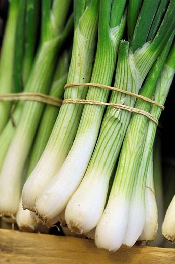 Green onions : Stock Photo