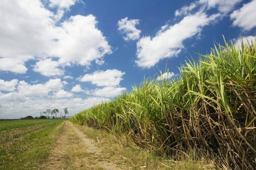 Stock Photo: 1566-508894 AUSTRALIA - Queensland - WHITSUNDAY COAST - Marian: Pioneer Valley - Sugar Cane Field