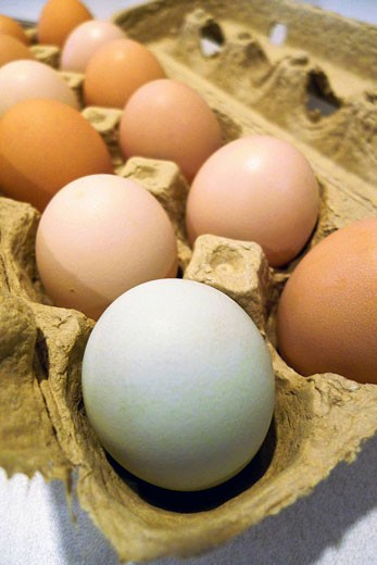 assorted fresh eggs : Stock Photo