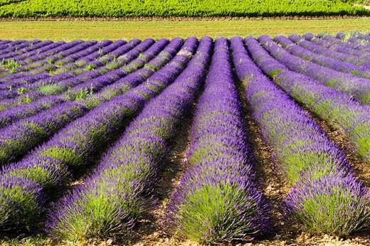 Region of Provence : Stock Photo
