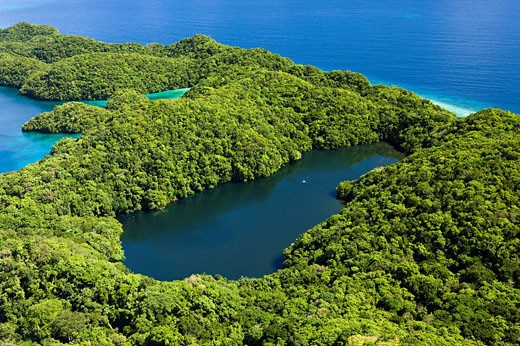 Aerial View of Jellyfish Lake of Palau, Micronesia, Palau : Stock Photo