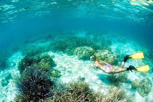 Snorkeling at shallow Coral Reef, Micronesia, Palau : Stock Photo