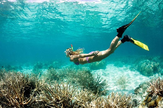 Skin Diving at Palau, Micronesia, Palau : Stock Photo