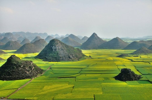 fields of rape flower blossoms in Luoping China : Stock Photo