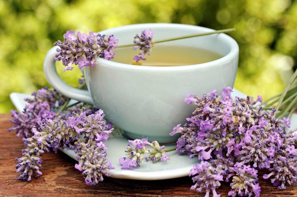 Lavender infusion (Lavandula officinalis) : Stock Photo