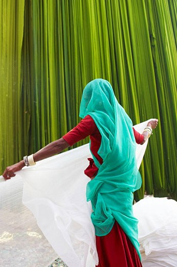 Stock Photo: 1566-521805 Getting fabric off the drying line, sari manufacturing plant, Rajasthan, India