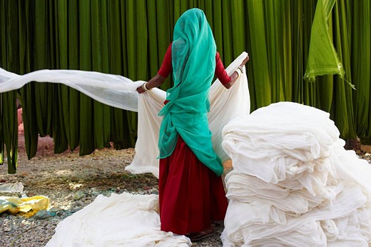 Getting fabric off the drying line, sari manufacturing plant, Rajasthan, India : Stock Photo