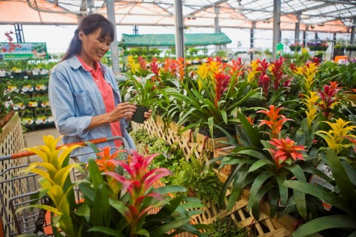 Woman shopping for plants : Stock Photo