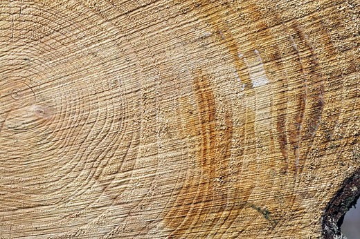 Stock Photo: 1566-526851 Layer of cut wood