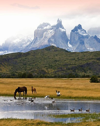 Cuernos del Paine, Torres del Paine National Park, Patagonia, Chile (March 2009) : Stock Photo