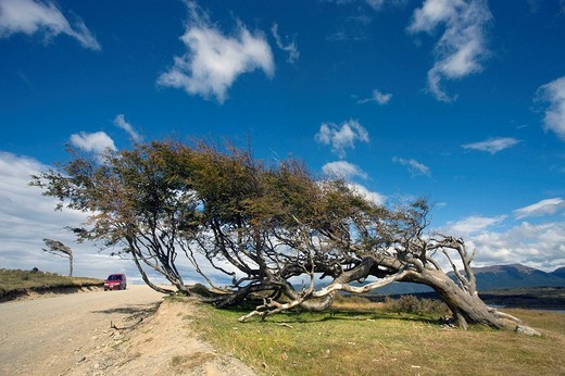 Stock Photo: 1566-536365 Tree at the End of the World, Tierra del Fuego landscape, Argentina (March 2009)