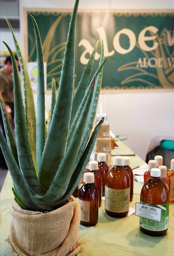 Stock Photo: 1566-537074 Aloe vera in a organic products stand, Bioterra (Organic products, bioconstruction, renewables energies, and efficient consumption fair), Ficoba, Irun, Guipuzcoa, Basque Country, Spain