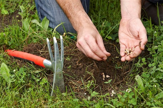 Planting seeds, garden tool, farming and gardening, Guipuzcoa, Basque Country, Spain : Stock Photo