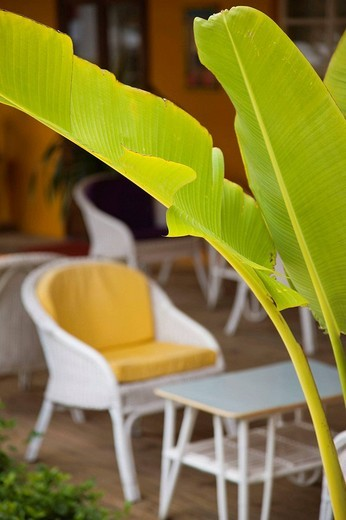 Stock Photo: 1566-538638 Chair and palm frond, Tamarin, Western Mauritius, Mauritius