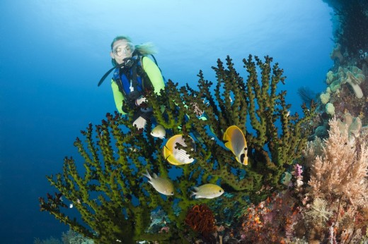 Scuba Diver watches Butterflyfish, Chaetodon adiergastos, Raja Ampat, West Papua, Indonesia : Stock Photo
