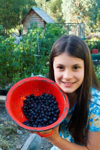 Young girl with red enamel colander of organically grown blueberries : Stock Photo
