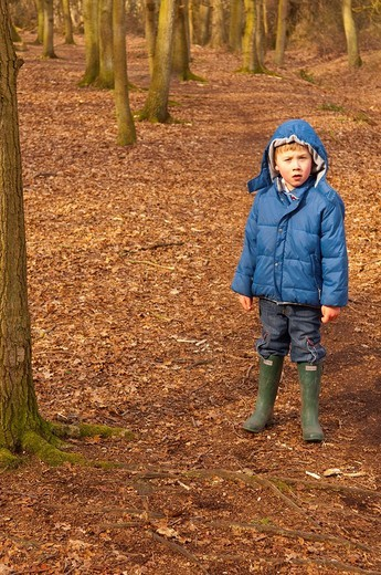 A MODEL RELEASED picture of a 6 year old boy in a Uk wood : Stock Photo