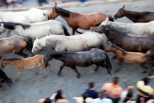 ´Saca de las yeguas´ festival, Almonte, Huelva province, Andalusia, Spain : Stock Photo