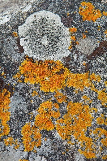 Lichens on rock, Castlebay, Barra, Outer Hebrides, Scotland, UK : Stock Photo