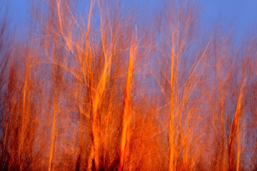 Evening light on trees in early spring Camera movement : Stock Photo