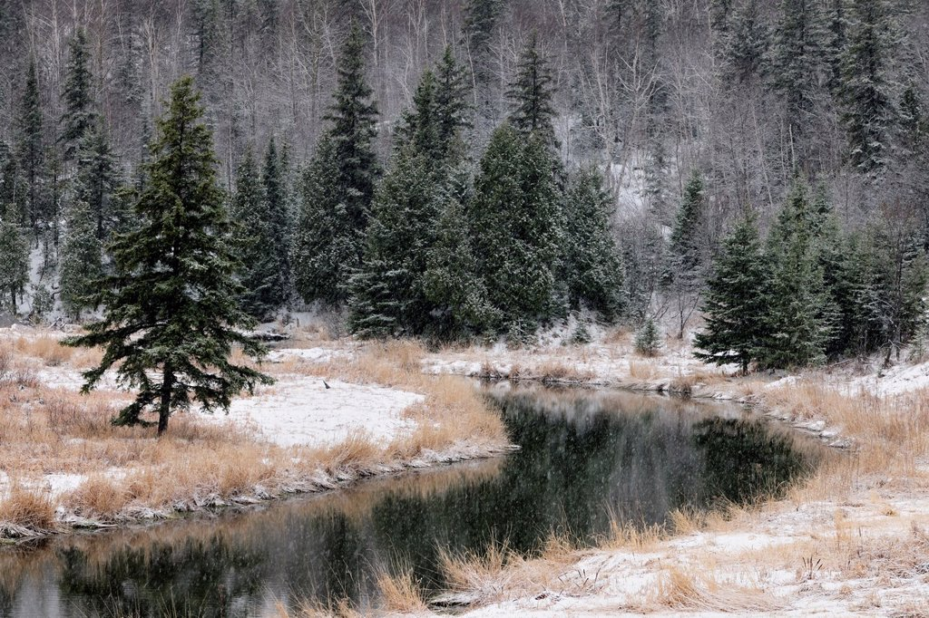 Stock Photo: 1566-567308 Early winter snow on banks of Junction Creek