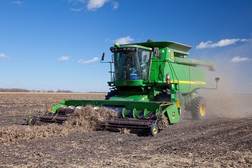 Combine harvester harvesting beans on the Froese farm near Winkler, Manitoba, Canada : Stock Photo