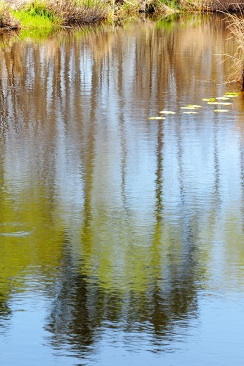 Grasses and trees reflected in Fairbank Creek. Ontario. Canada. : Stock Photo