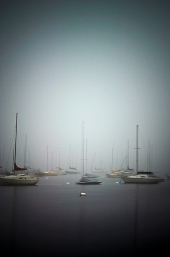 Stock Photo: 1566-571774 Sailboats on fog shrouded Lake Harriet at dawn