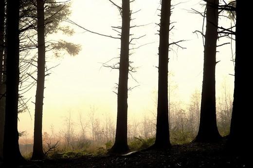 Woods on Beacon Fell in Bowland, Lancashire, England, UK : Stock Photo