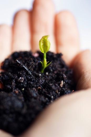 Hand holding seedling : Stock Photo