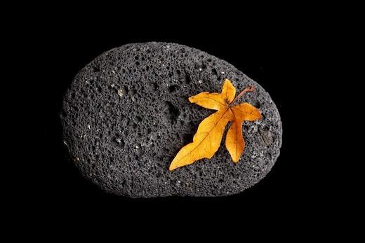 Stock Photo: 1566-576706 autumn leave on stone - japan zen spirit inspired arrangement