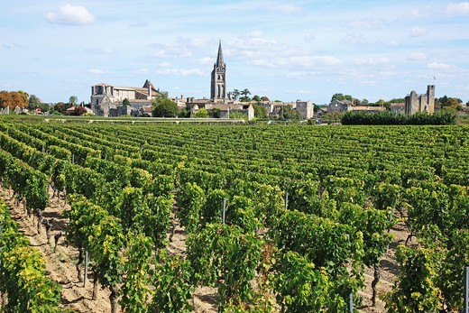 France, Gironde, Saint-Emilion, Bordeaux vineyards : Stock Photo