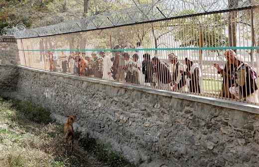 Kabul ZOO in afghanistan : Stock Photo