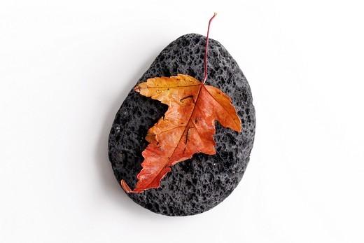 clip image - autumn leave on stone - japan zen spirit inspired arrangement : Stock Photo