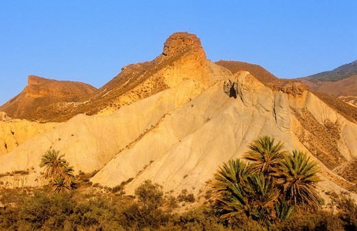 Stock Photo: 1566-588419 Desert of Tabernas, the only real desert of Europe Dry riverbed Almeria province, Andalucia, Spain