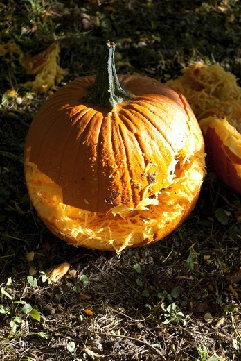 Stock Photo: 1566-591712 The shredded smile of a fall Pumpkin