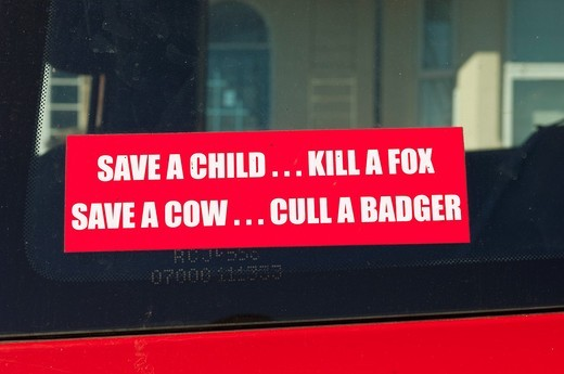 Stock Photo: 1566-591822 A sign in a car window reading SAVE A CHILD   KILL A FOX , SAVE A COW   CULL A BADGER