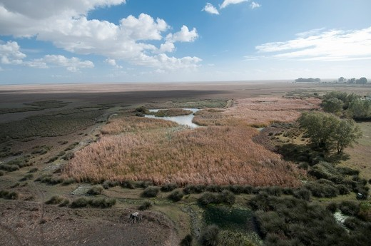 Marsh and swamp view of the Doñana National Park near the Palacio de Doñana, central scientific station belonging to the Superior Council of Science Research CSIC, Huelva, Spain : Stock Photo