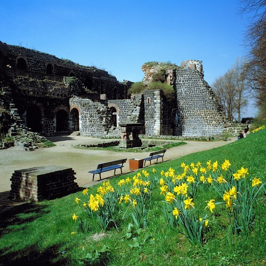 Germany, Duesseldorf, Rhine, Lower Rhine, Rhineland, North Rhine-Westphalia, NRW, D-Duesseldorf-Kaiserswerth, Kaiserpfalz, imperial palace, ruin, Holy Roman Empire, Middle Ages, spring blossom, daffodils : Stock Photo