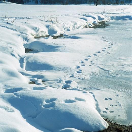 Stock Photo: 1566-595047 nature, seasons, winter, snowy landscape, lakeside, frozen lake, prints in the snow, animal prints, paw prints, Graubuenden, Switzerland