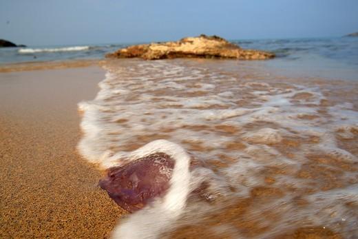 Stock Photo: 1566-595212 Cala del Pilar Menorca Spain Balearic Islands Biosphere Reserve
